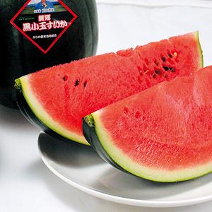 黒小玉すいか(優品)1.6kg×5玉