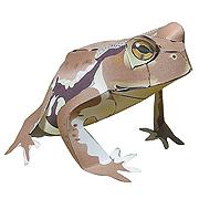 <東急百貨店>【すぐできるカエル】2.ニホンヒキガエル