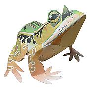 <東急百貨店>【すぐできるカエル】3.トノサマガエル