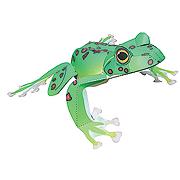 <東急百貨店>【すぐできるカエル】4.モリアオガエル画像